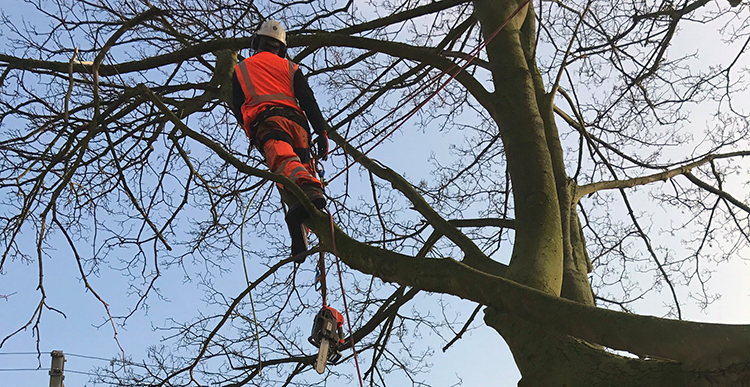 Kookaburra Tree Maintenance Services